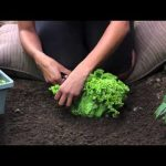 How to Start a Garden Without a Backyard